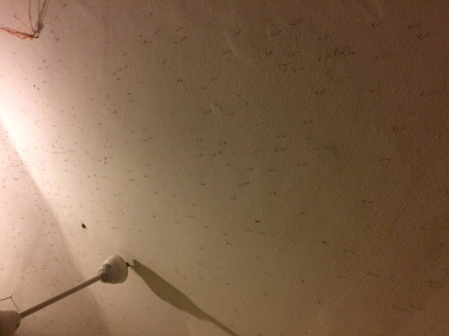 mosquitos-on-the-ceiling